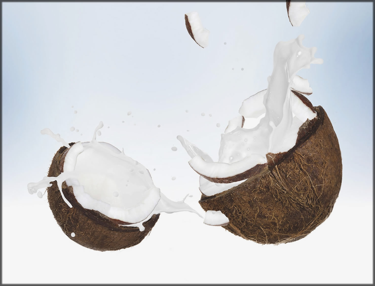 Coconut High In The Protein
