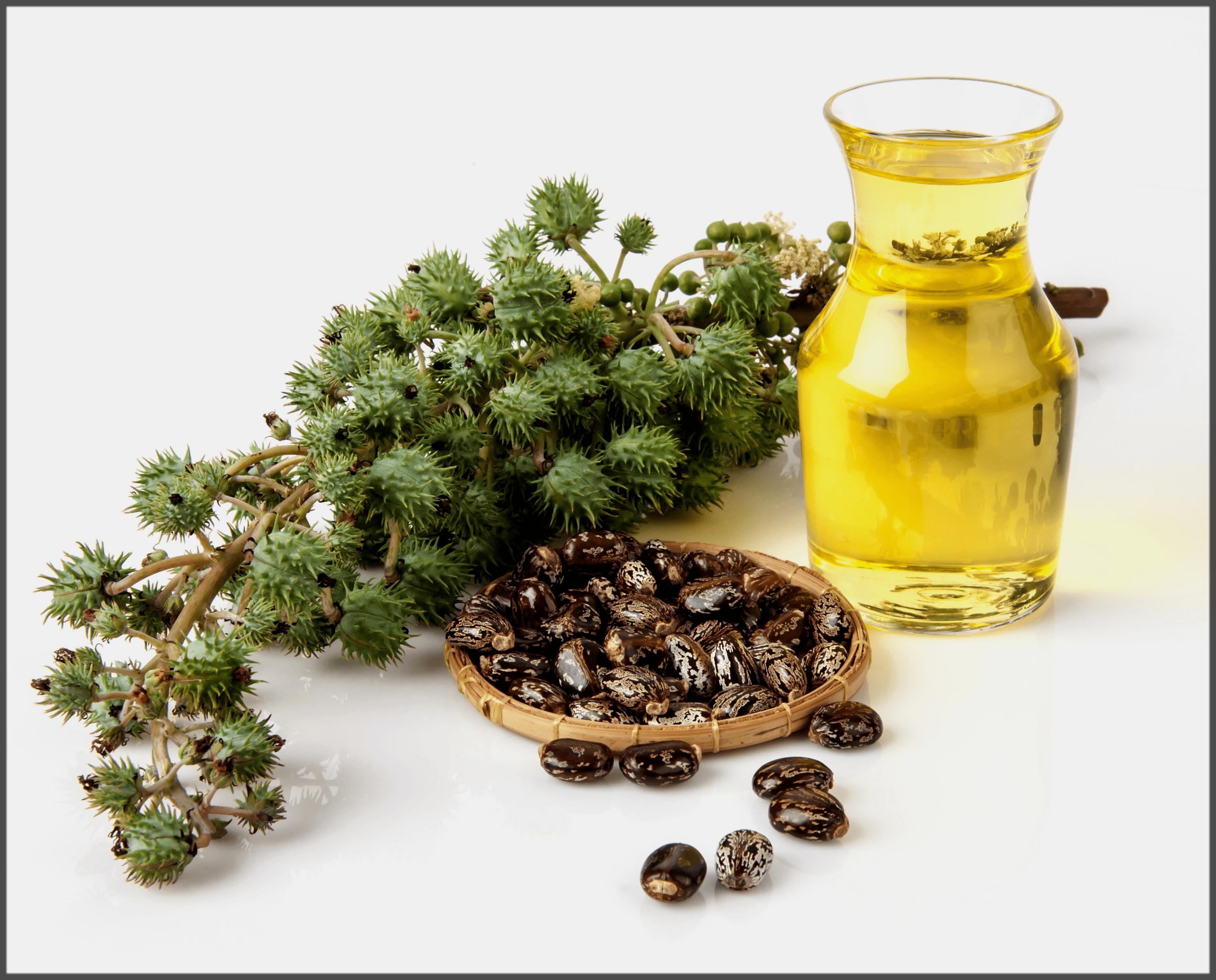 castor oil home remedies for blackheads-min