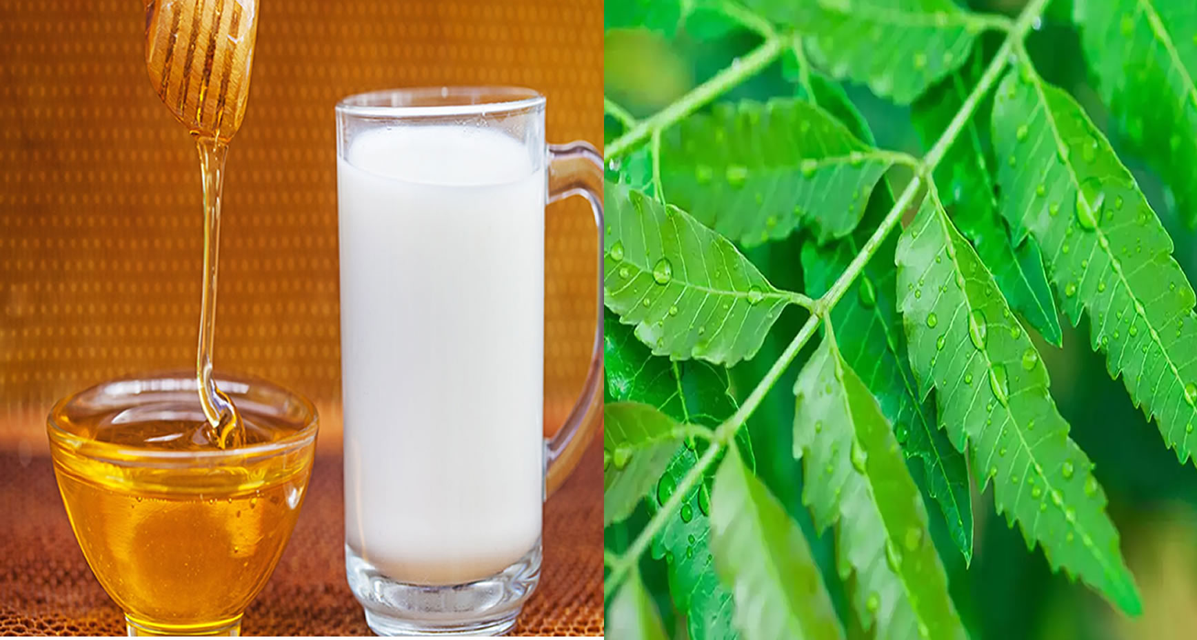 milk honey and neem