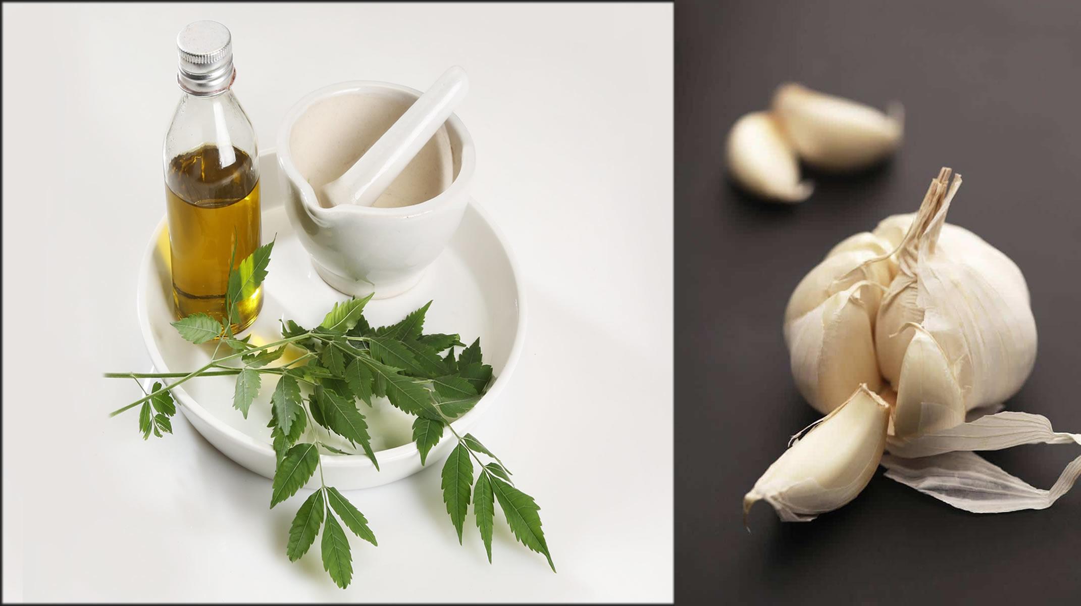 neem garlic and coconut oil