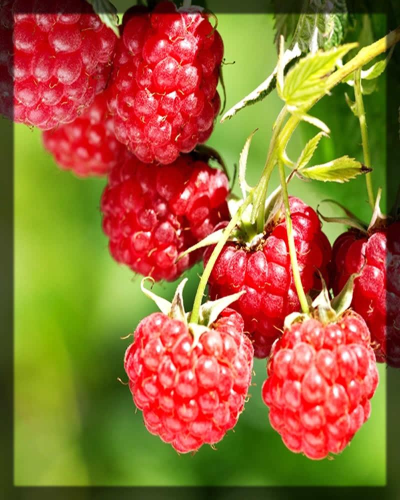 raspberries for dark lips